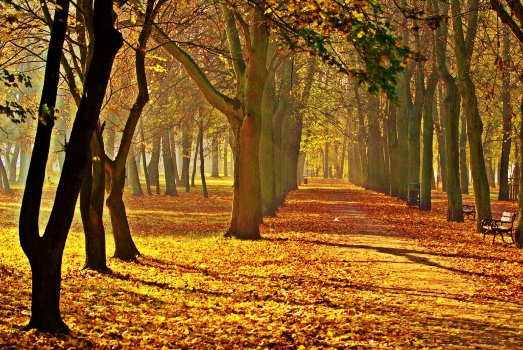 Zdjęcia: Inowrocław, Kuj-pom., Jesień w parku, POLSKA