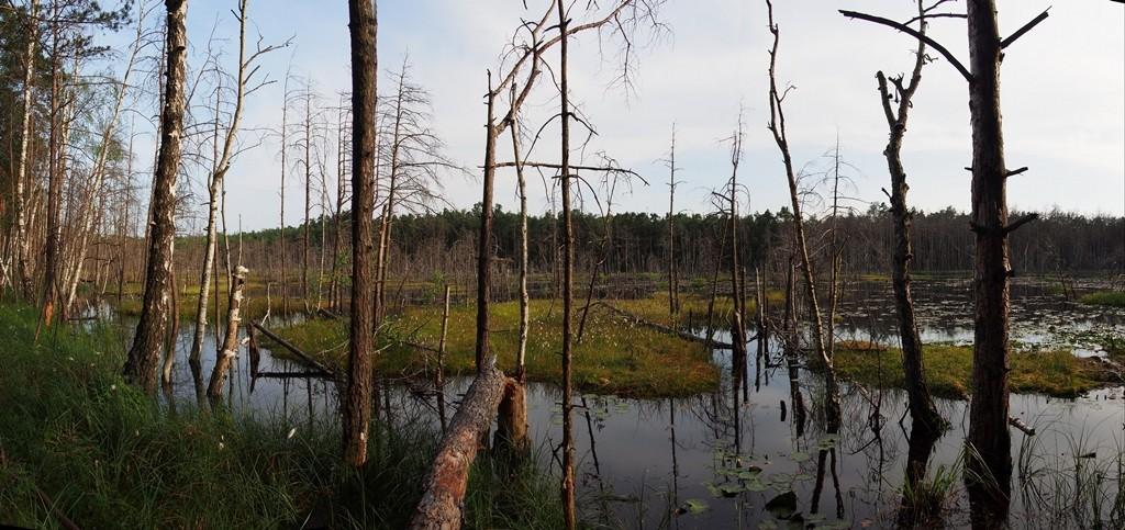 Zdjęcia: Mazowiecki Park Krajobrazowy, Mazowsze, Rezerwat Bagno Bocianowskie , POLSKA