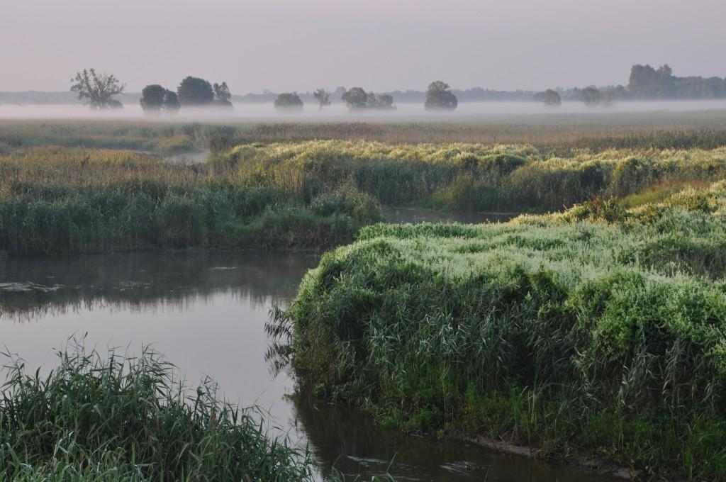 Zdjęcia: Topilec nad Narwią, Narwiański Park Narodowy, Rankiem nad rzeką, POLSKA