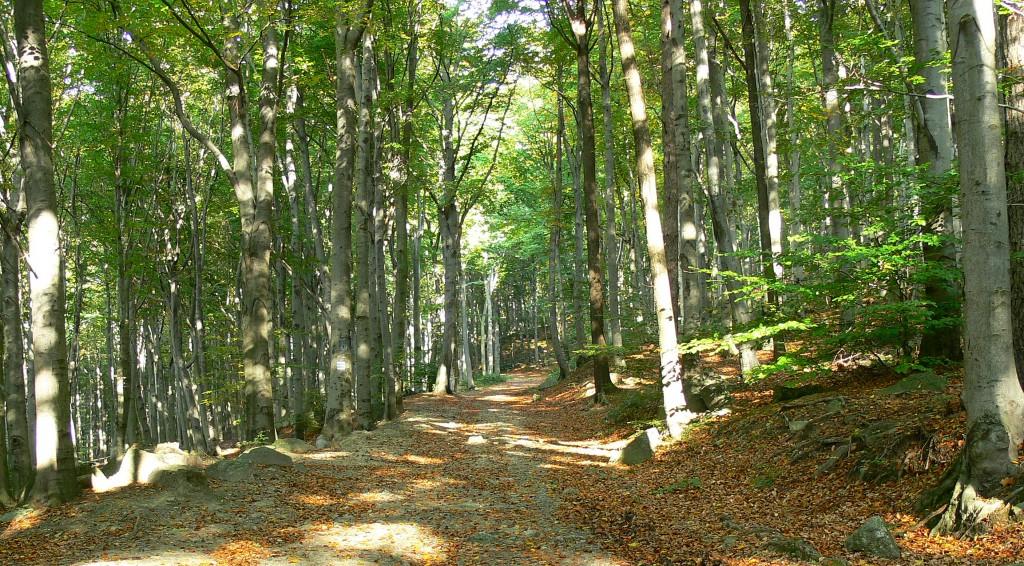 Zdjęcia: Masyw Ślęży, DOLNY ŚLĄSK, jesienny las bukowy w masywie ślęży, POLSKA