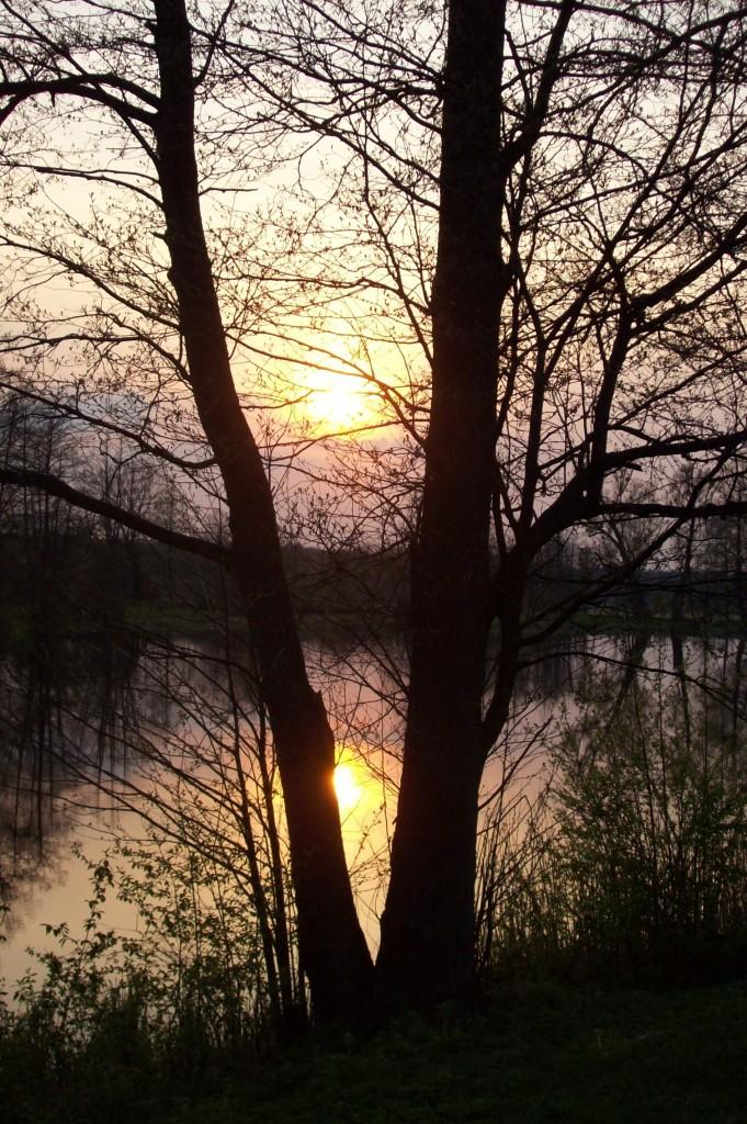 Zdjęcia: Białowieża, Podlaskie, Zachód słońca  w Puszczy, POLSKA
