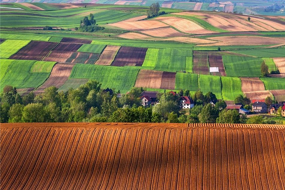 Zdjęcia: Koniusza, Małopolska, Małopolskie pola, POLSKA