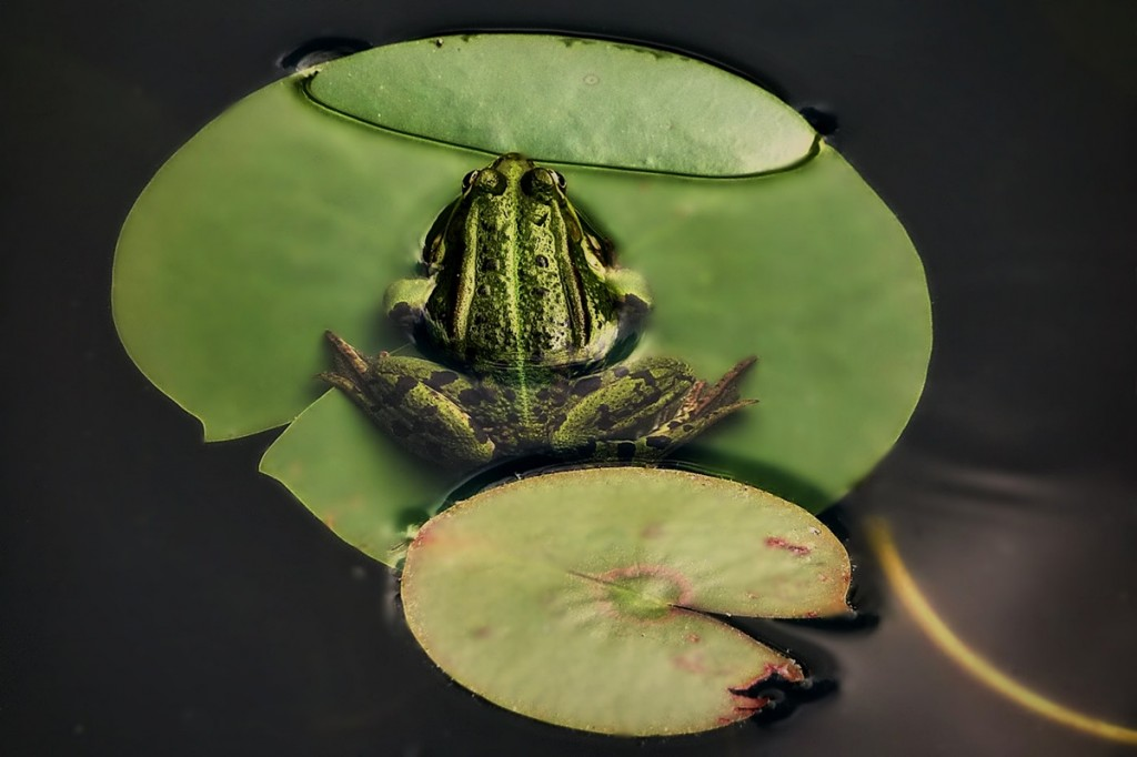 Zdjęcia: ....., łodzkie, Na wyspach zielonych..., POLSKA