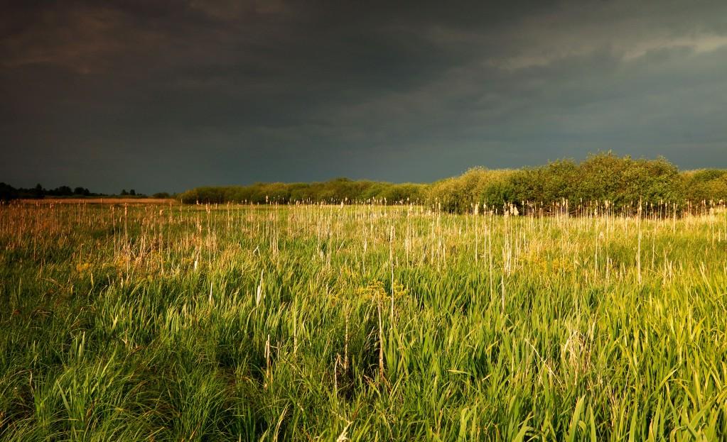 Zdjęcia: Dolina Noteci, pow-żniński, Przed burzą, POLSKA