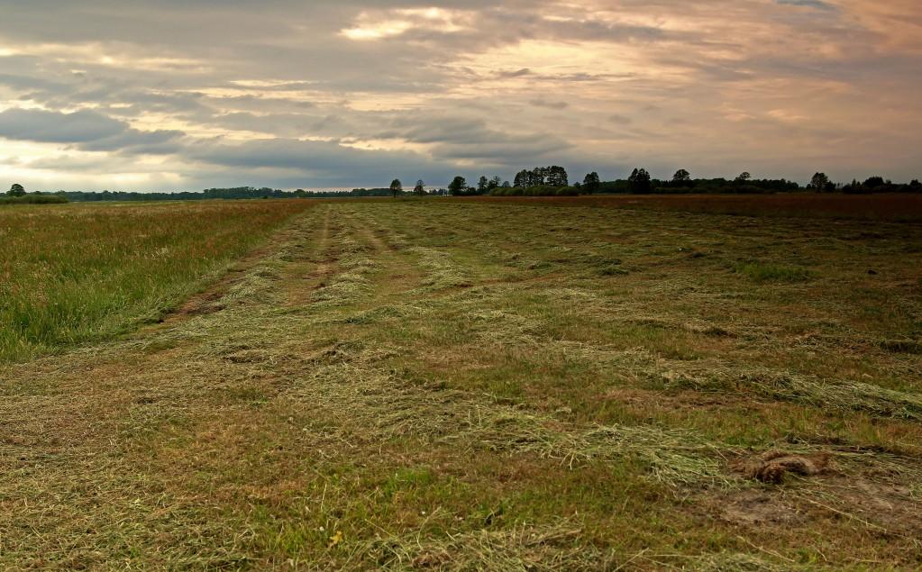 Zdjęcia: Dolina Noteci, pow-żniński, Zachód słońca na łęgach, POLSKA