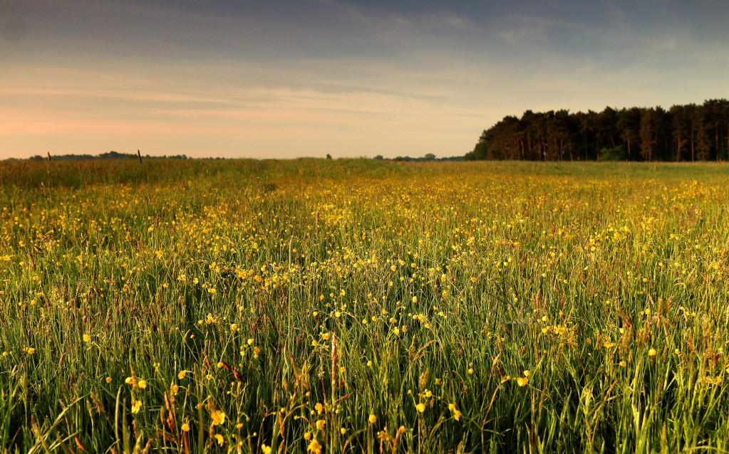 Zdjęcia: Dolina Noteci, pow-żniński,  Kolorowa łąka, POLSKA