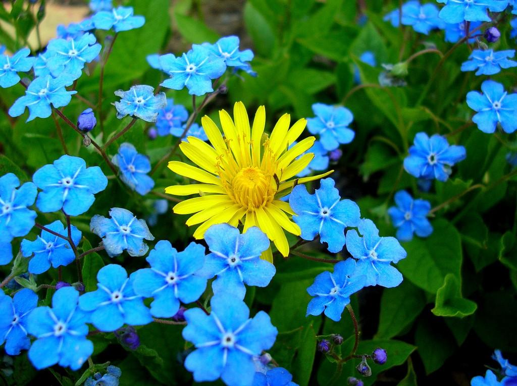Zdjęcia: Powsin, Mazowieckie, Chodz pomaluj mój swiat na żółto i na niebiesko..., POLSKA