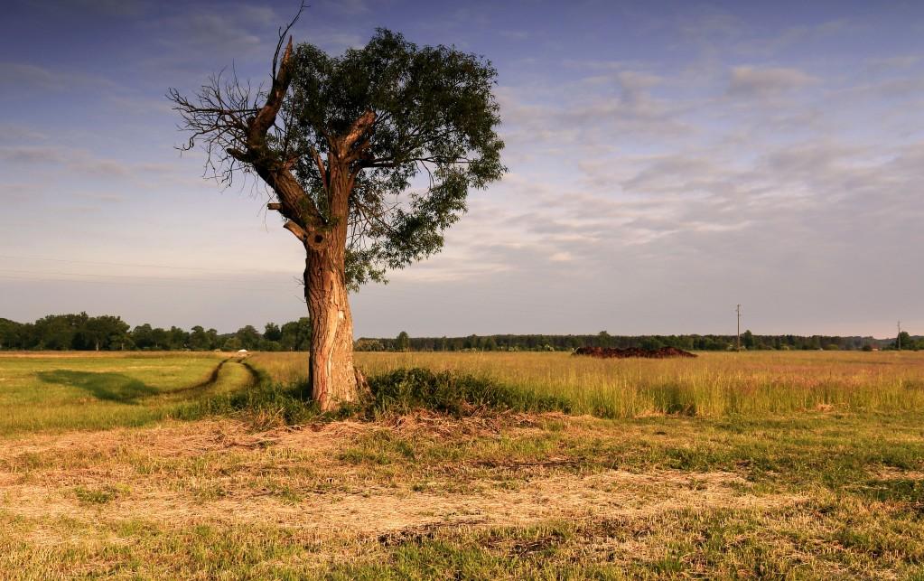 Zdjęcia: Dolina Noteci, pow-żniński, Moje życie to wędrówka po ....., POLSKA