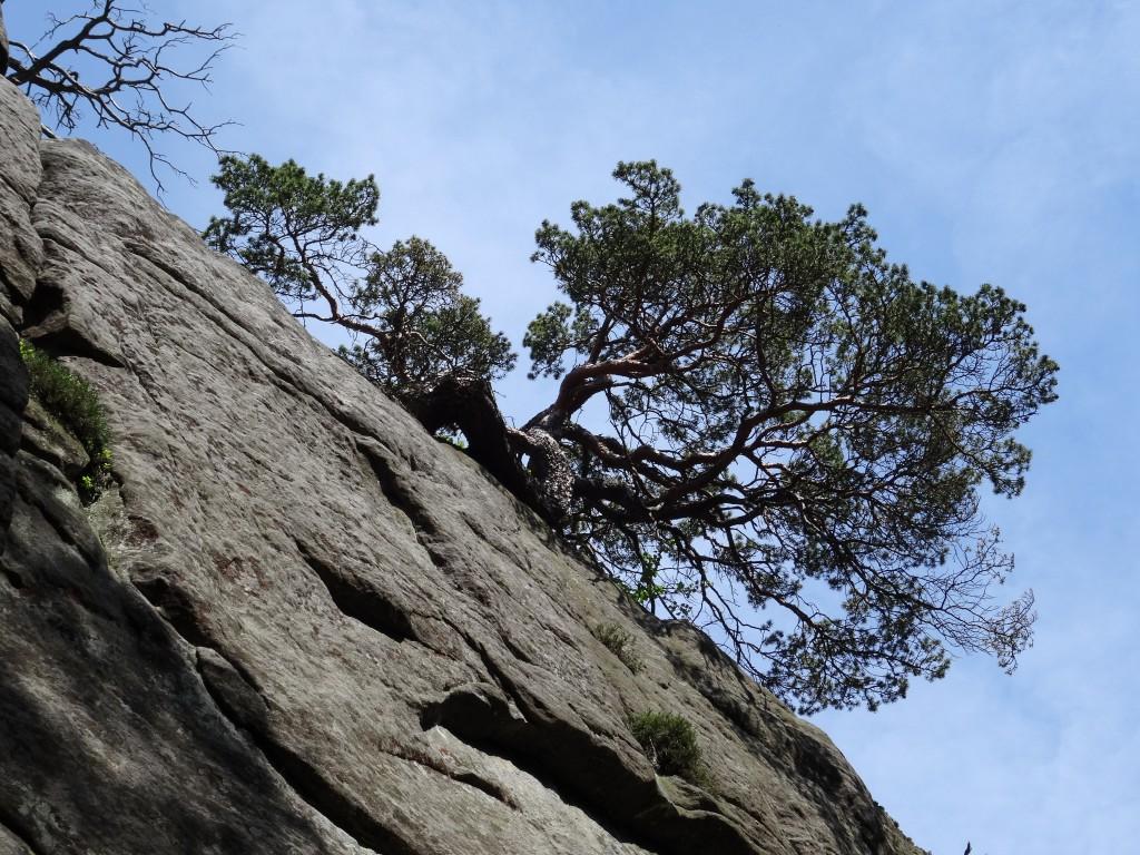 Zdjęcia: Szczeliniec, Góry Stołowe, Życie na skale, POLSKA