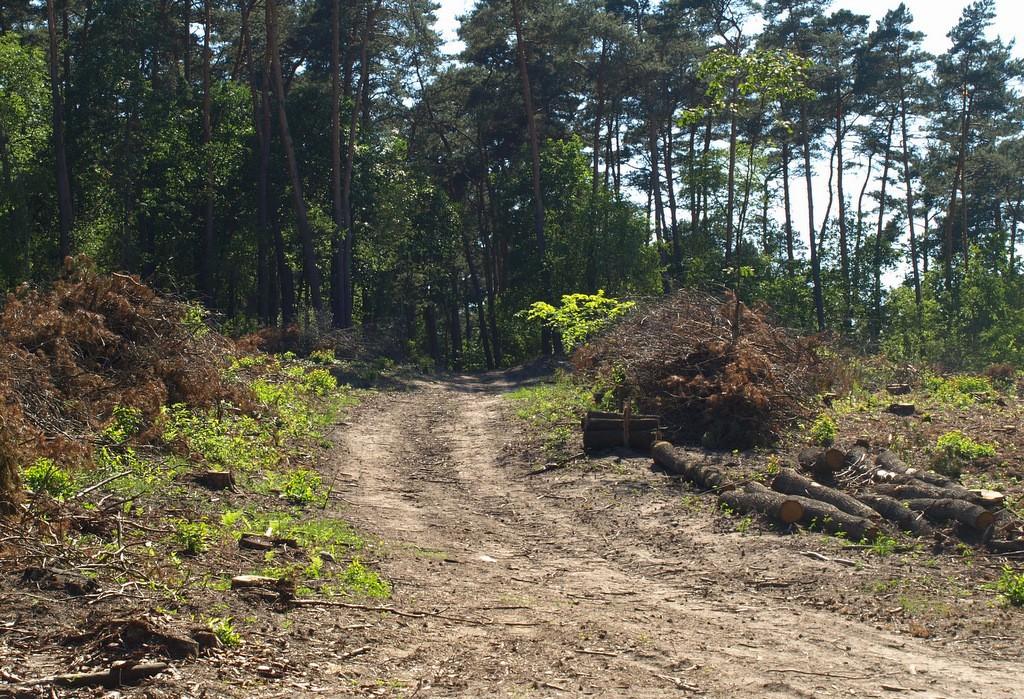Zdjęcia: Dziewicza góra, Wielkopolska, droga w lesie, POLSKA