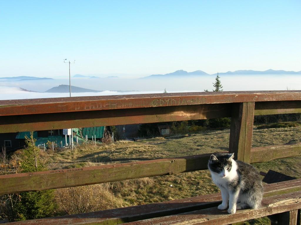 Zdjęcia: Wielka Racza, Beskid Żywiecki, Kot pod Wielkim Rozsutcem widzianym z Wielkiej Raczy, POLSKA
