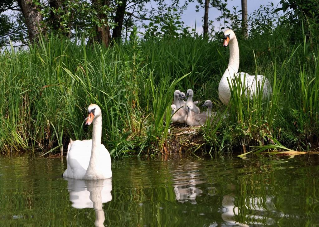 Zdjęcia: rzeka Krutynia, Mazury, Rodzina, POLSKA