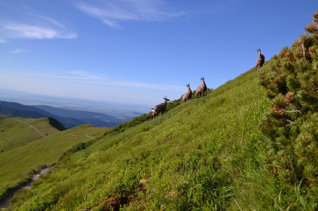 Zdjęcia: Kończysty Wierch, Tatry Zachodnie, Na szlaku II, POLSKA