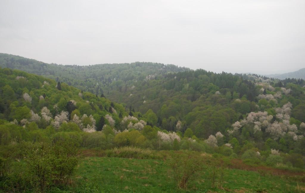 Zdjęcia: Terka, Bieszczady, Bieszczadzka wiosna, POLSKA