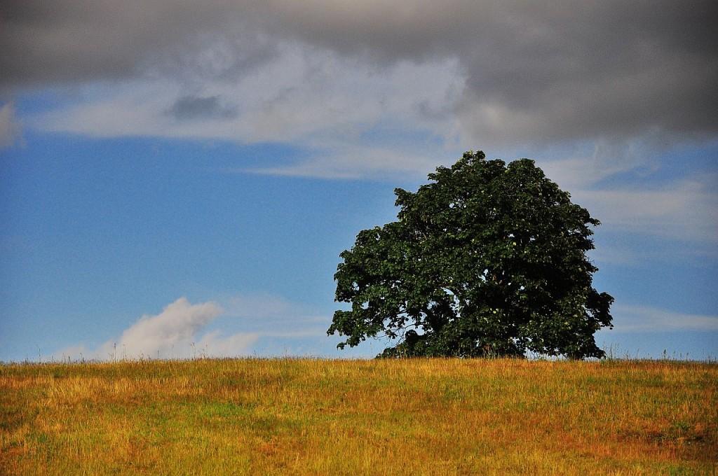 Zdjęcia: Kozin, Pomorze Zachodnie, Drzewna impresja, POLSKA