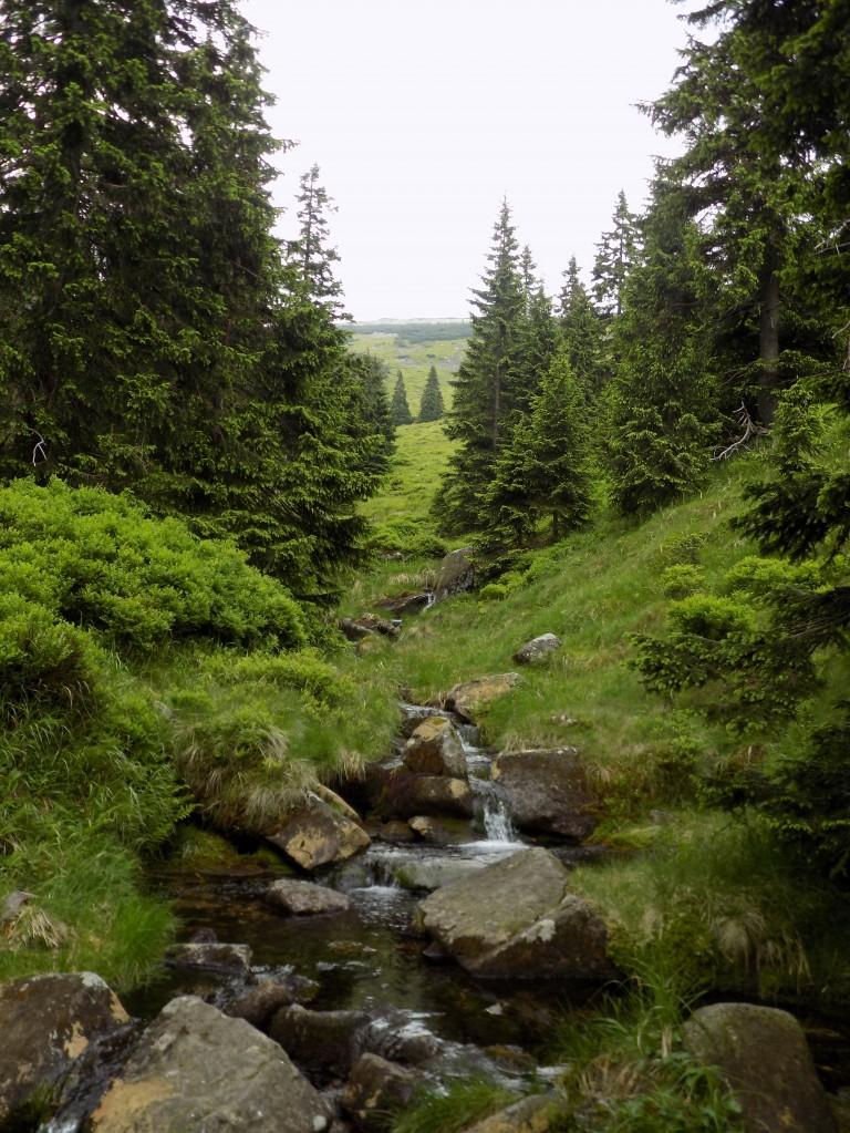 Zdjęcia: Śląski Grzbiet, Karkonosze, Gdzie strumyk..., POLSKA