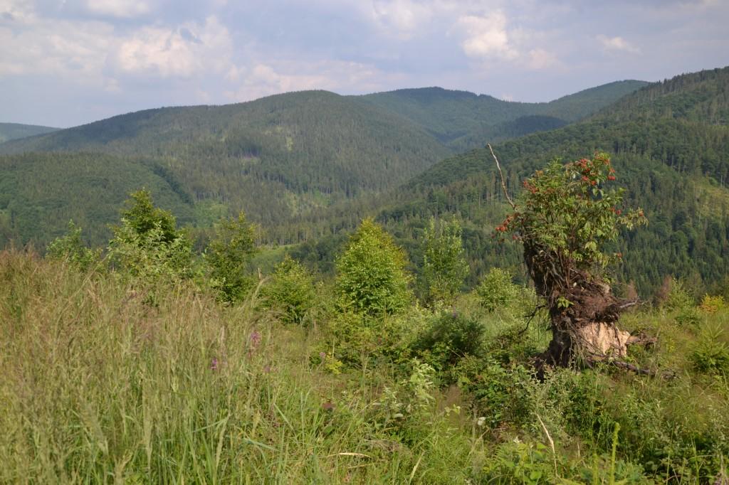 Zdjęcia: Pod Majcherową, Beskid Żywiecki, Rezerwat, POLSKA
