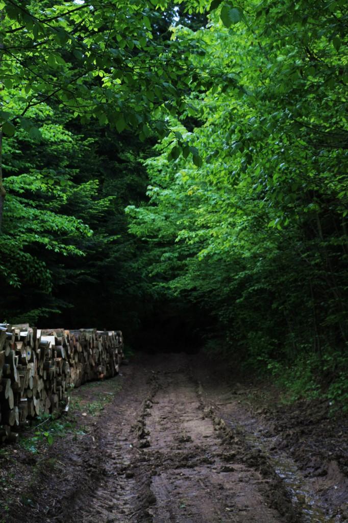 Zdjęcia: Klimkówka, Podkarpackie, Droga w lesie, POLSKA