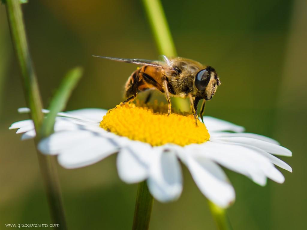 Zdjęcia: Tatry, małopolska, pszczola, POLSKA