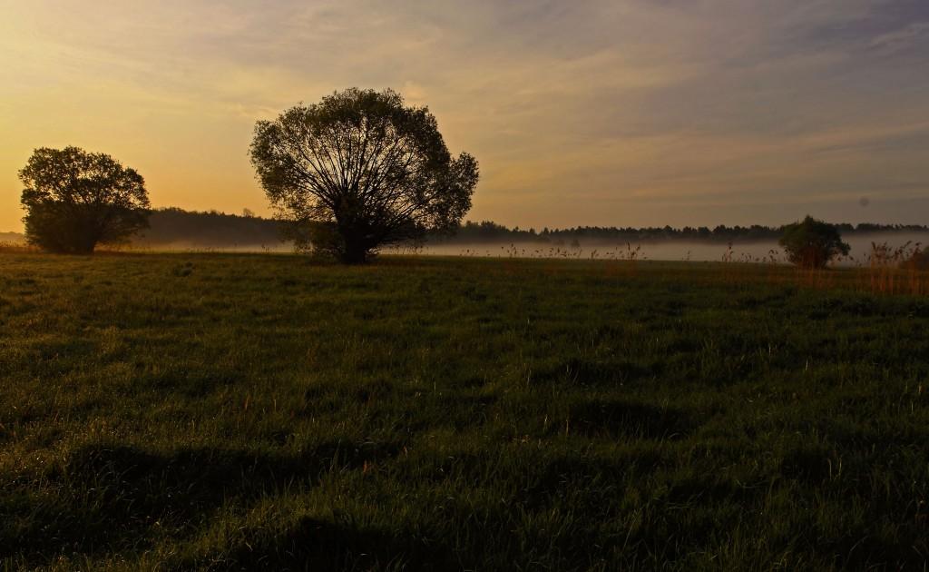 Zdjęcia: Dolina Noteci, pow-żniński, Mglisty poranek, POLSKA