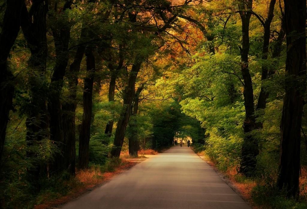 Zdjęcia: Otolice, łodzkie, Jesienna aleja, POLSKA