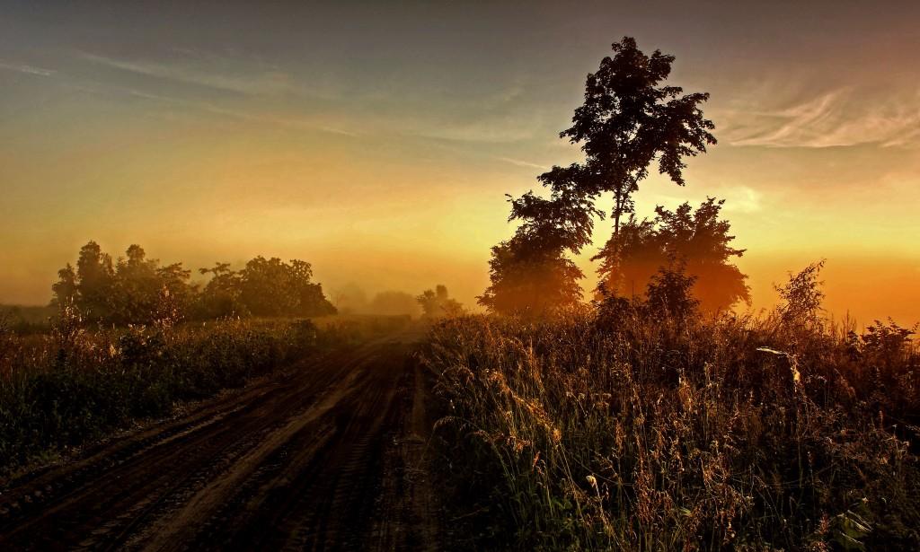Zdjęcia: Dolina Noteci, pow-żniński, Poranek we mgle , POLSKA