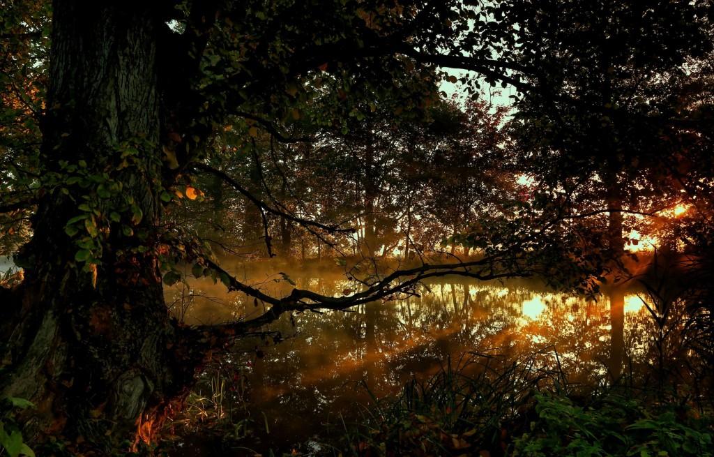 Zdjęcia: Dolina Noteci, pow-żniński, Jesienne mgły, POLSKA