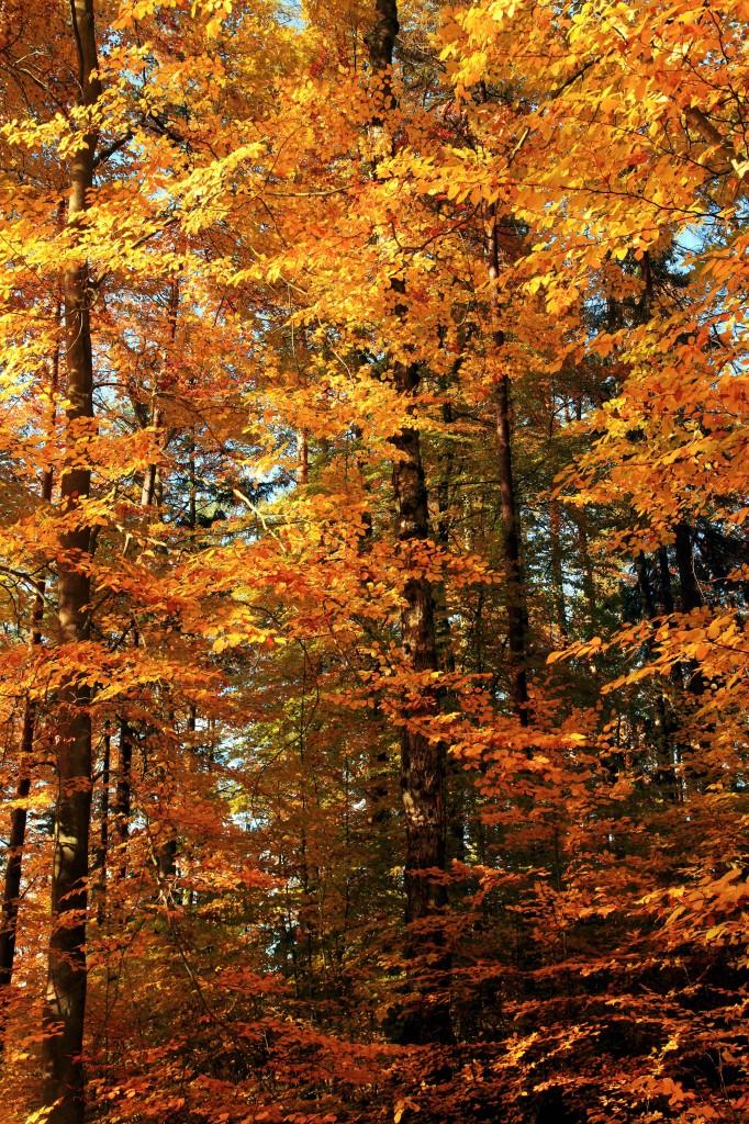 Zdjęcia: Otomiński Obszar Chronionego Krajobrazu, Kolbudy, Złoto jesieni, POLSKA