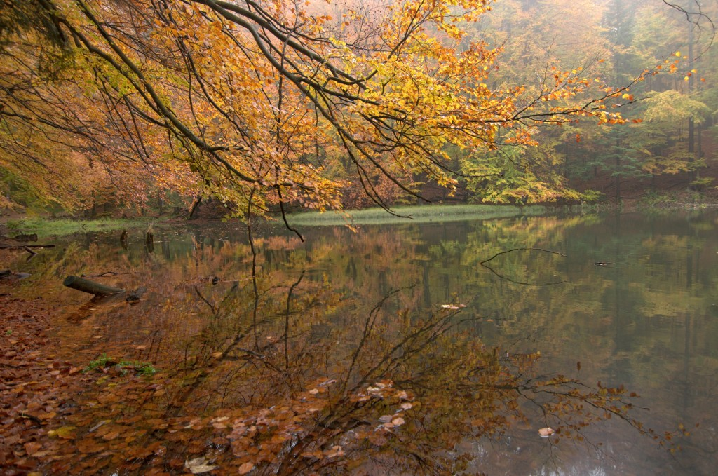 Zdjęcia: Jeziorka Duszatyńskie, Bieszczady Zachodnie, Jeziorka Duszatyńskie jesienią, POLSKA