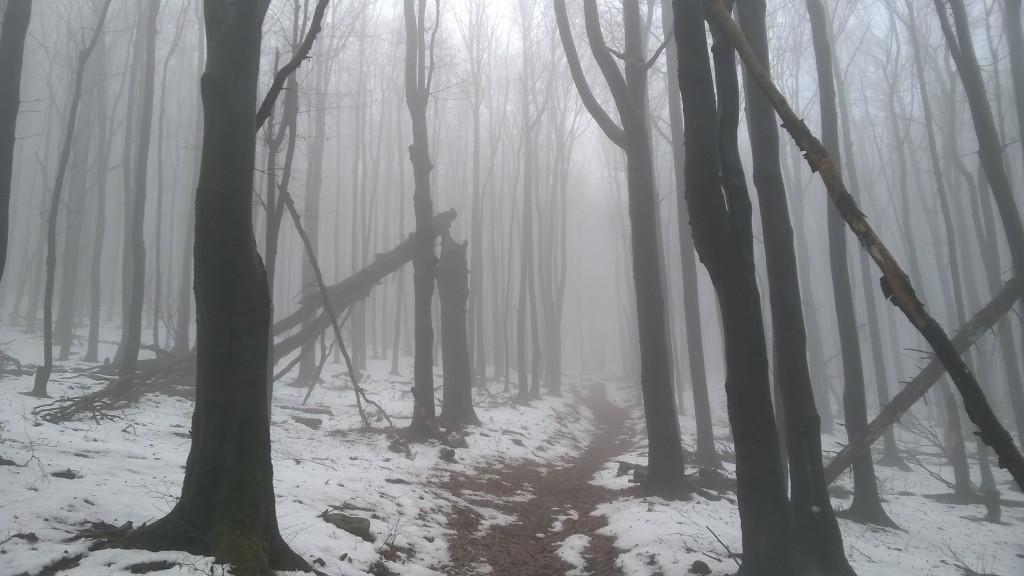 Zdjęcia: Beskid Niski, Magura, Podkarpacie, Beskid Niski i uroki chmur, POLSKA