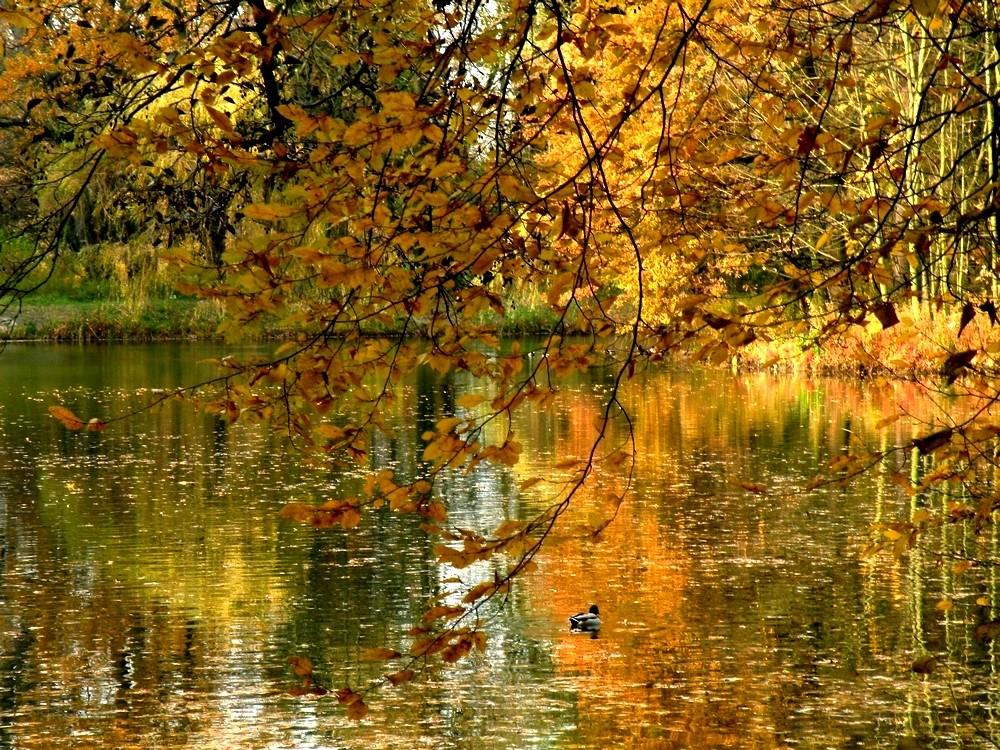 Zdjęcia: Opole, opolskie, Jesień na wyspie Bolko, POLSKA
