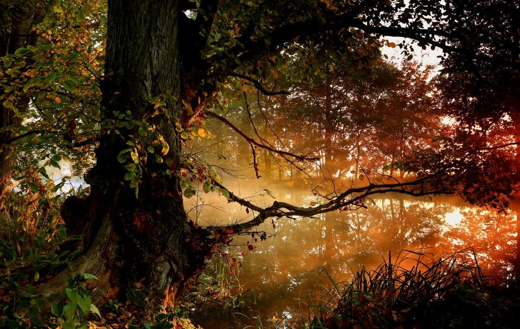 Zdjęcia: Dolina Noteci, pow-żniński,  Październikowe poranne mgły , POLSKA
