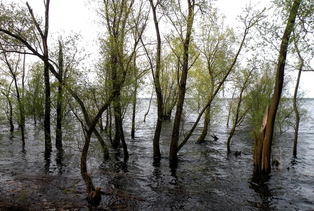 """Zdjęcia: Turawa, opolskie, Las """"namorzynowy"""", POLSKA"""