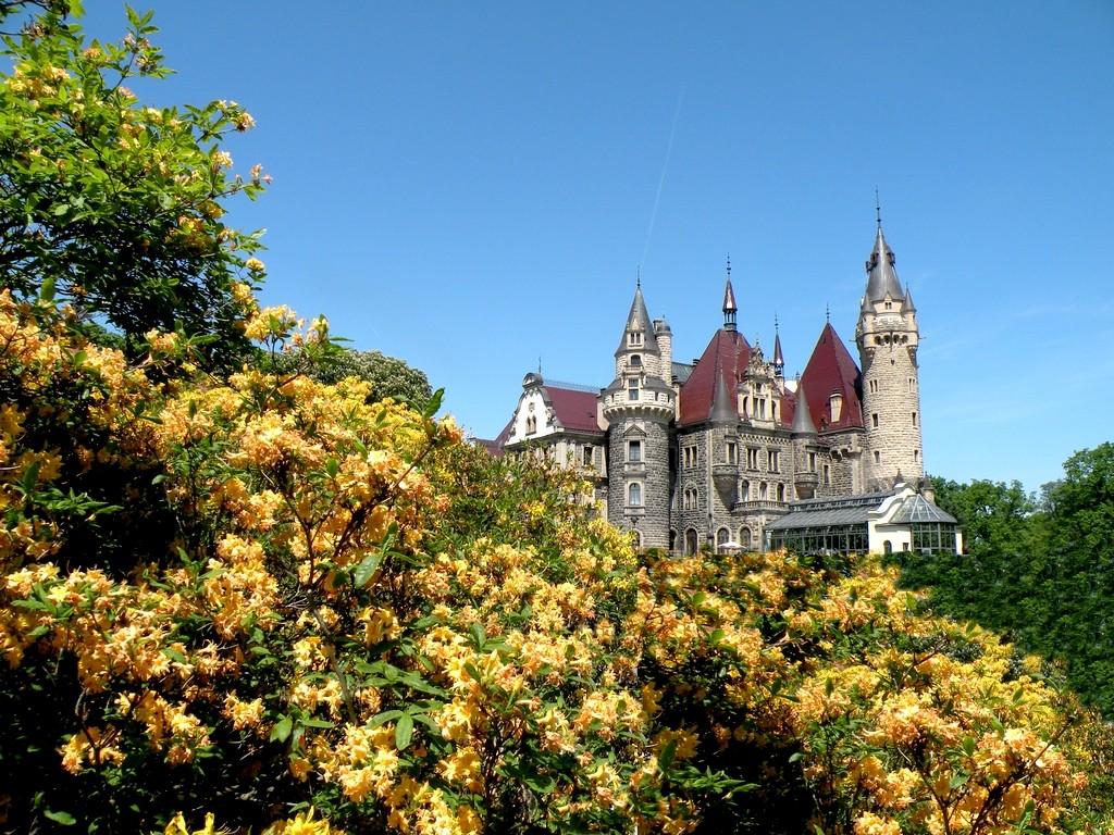 Zdjęcia: Moszna, opolskie, Zamek z za azalii, POLSKA