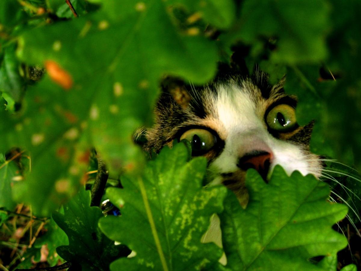 Zdjęcia: okolice Wejherowa, Kaszuby, przyczajony Tygrys, ukryty smok, POLSKA