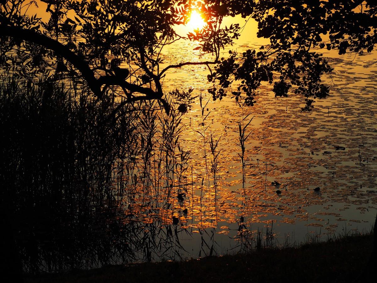 Zdjęcia: Postawelek, Suwalszczyzna, Pozłacane jezioro, POLSKA