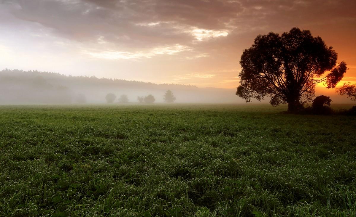 Zdjęcia: Dolina Noteci, pow-żniński, Dzisiejszy świt na łęgach, POLSKA
