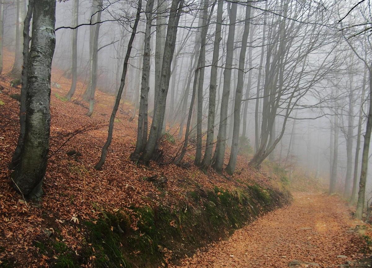 Zdjęcia: Pod Wielką Raczą, Beskid Żywiecki, Na szlaku, POLSKA