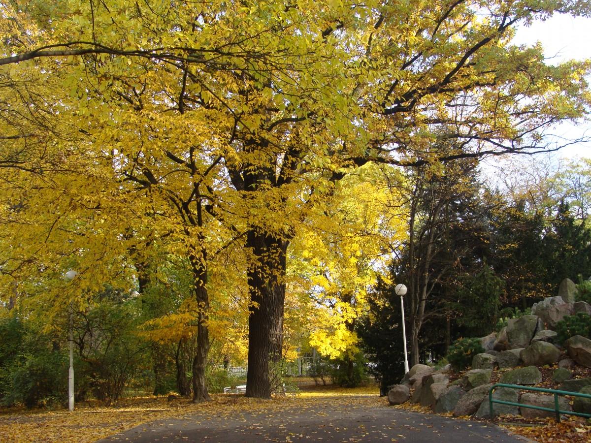 Zdjęcia: Poznań-Park Wilsona, Wielkopolska, Jesień w parku, POLSKA