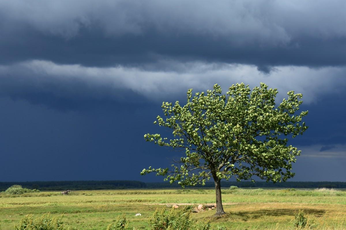 Zdjęcia: Okolice Białego Grądu, Biebrzański Park Narodowy, Przed burzą, POLSKA