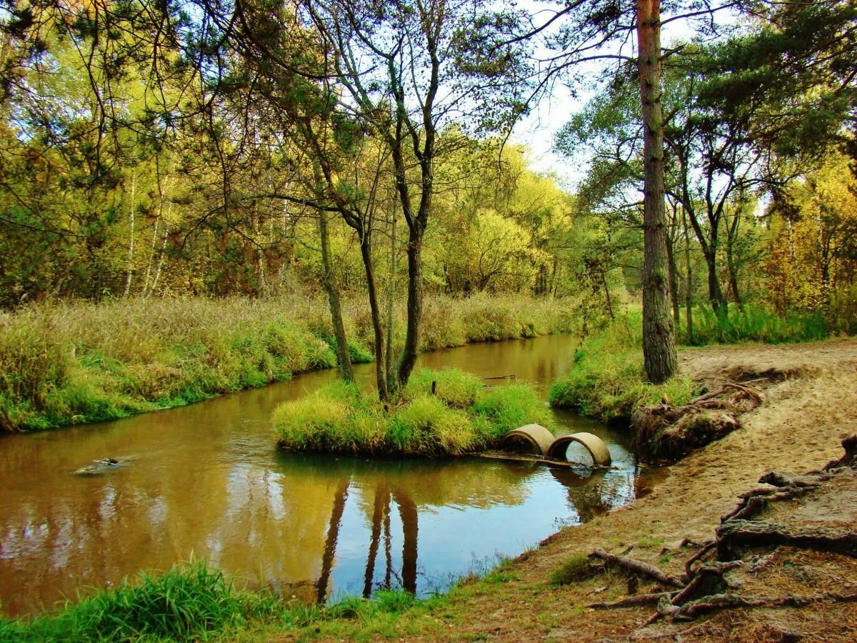 Zdjęcia: Sielpia Wielka, województwo świętokrzyskie, Sielpia Wielka-rzeka Czarna Konecka, POLSKA