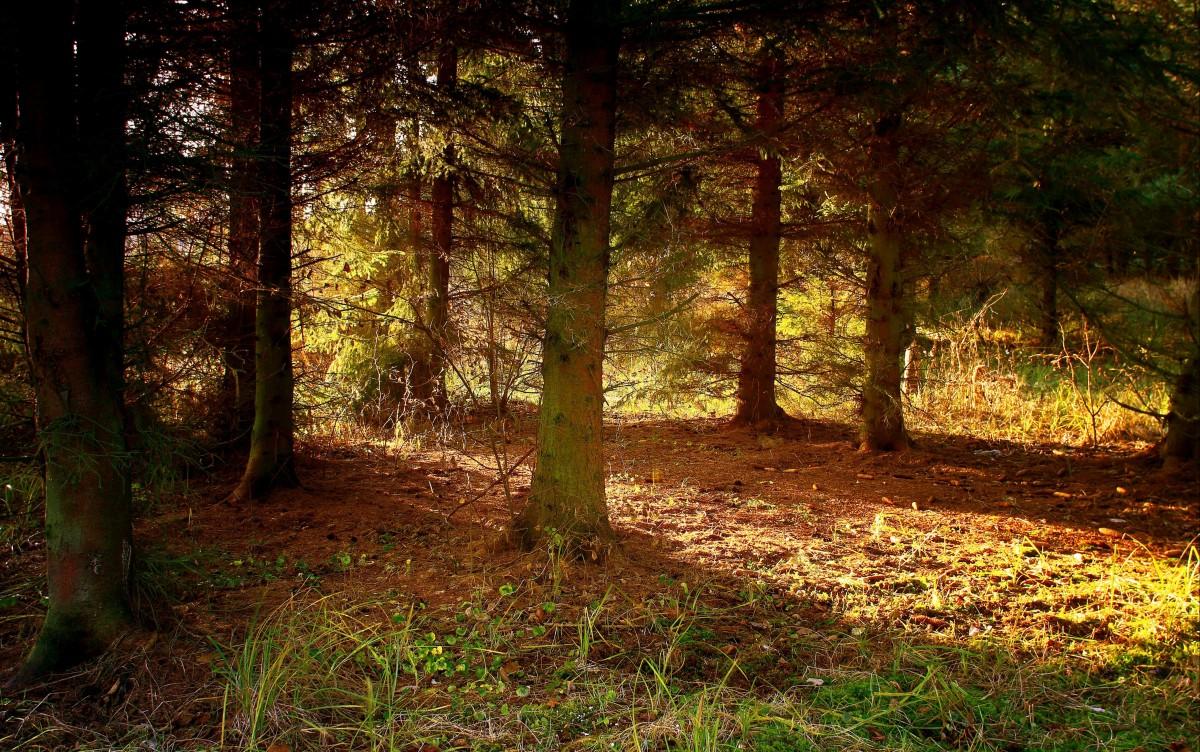 Zdjęcia: Dolina Brdy, Bory Tucholskie, Zapach lasu, POLSKA