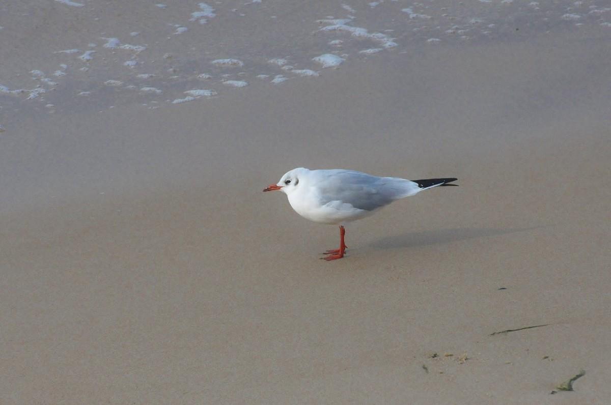 Zdjęcia: Rowy, Pomorskie, Rowy, ptaki, POLSKA