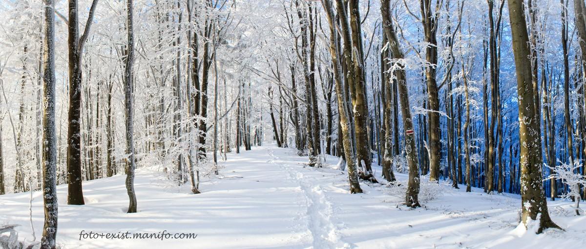Zdjęcia: Beskid Sądecki, Beskid Sądecki, Odcienie zimy, POLSKA