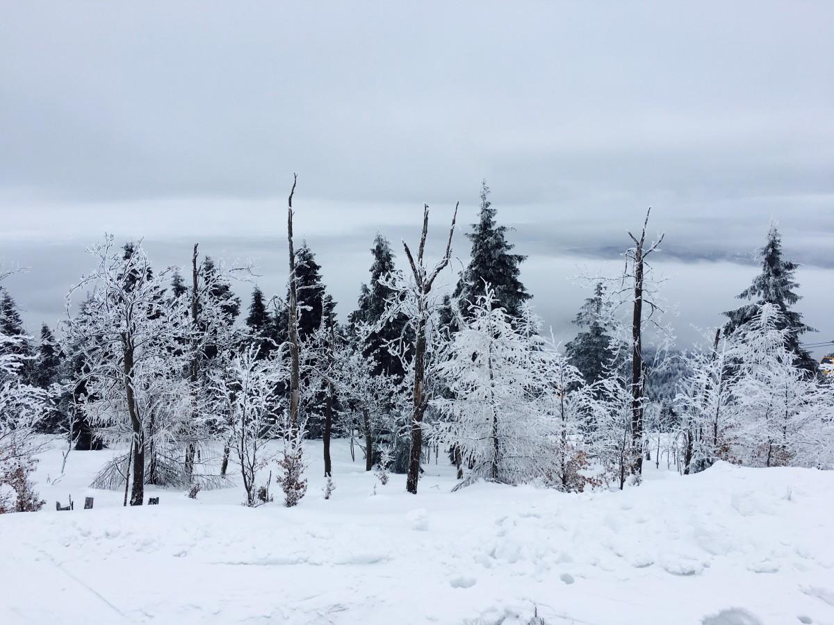 Zdjęcia: Świeradów Zdrój, Dolny Ślask, Drzewa w zimowej szacie, POLSKA