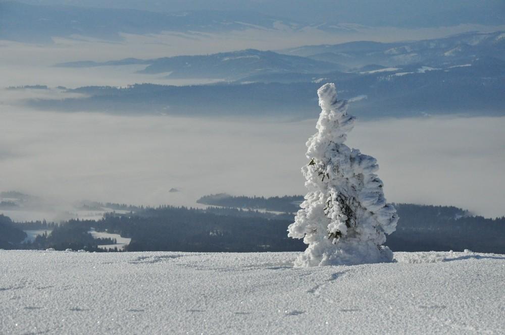 Zdjęcia: Babia Góra, Beskidy, Drzewko, POLSKA