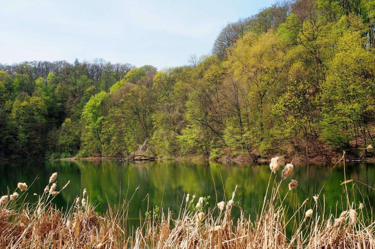 Zdjęcia: Jezioro Szmaragdowe, Szczecin-Zdroje, Zachodniopomorskie, wkrótce znów się zazieleni..., POLSKA