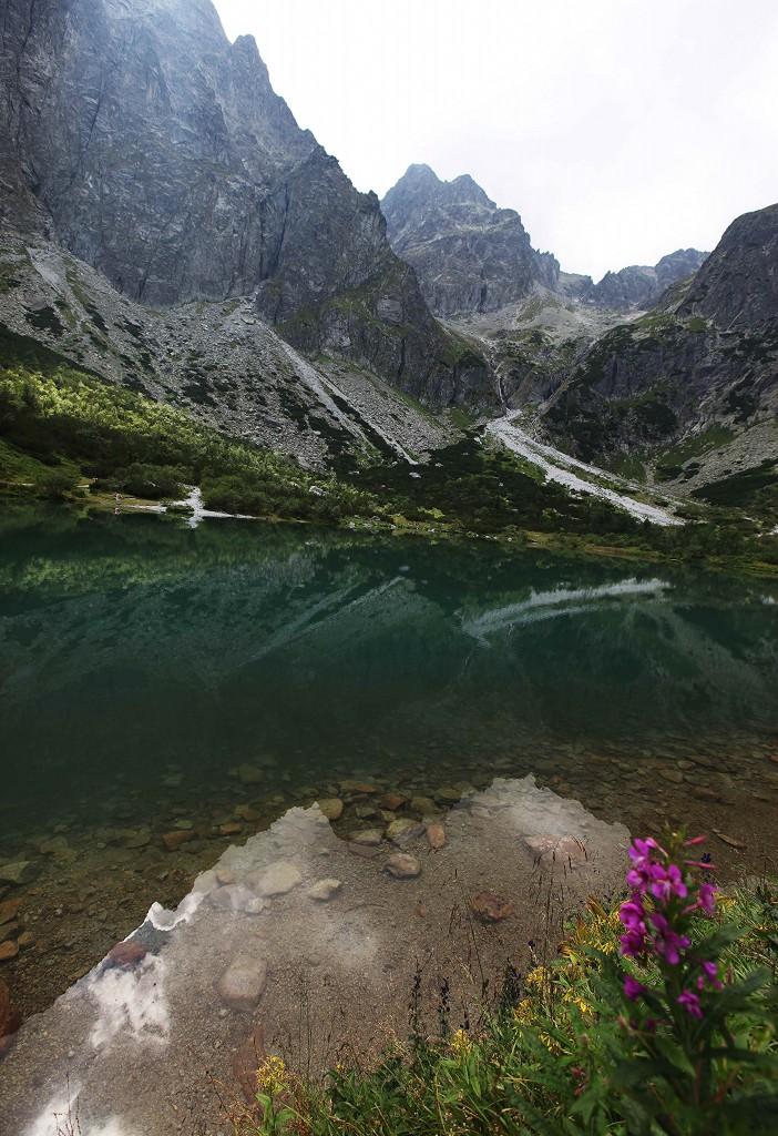 Zdjęcia: Zielony Staw Kieżmarski, Tatry, Kwiatowy akcent, POLSKA