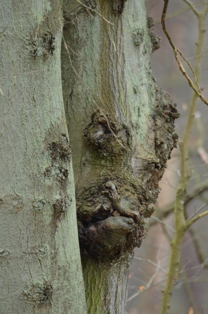 Zdjęcia: Woliński Park Narodowy, Zachodniopomorski, Leśne portrety, POLSKA