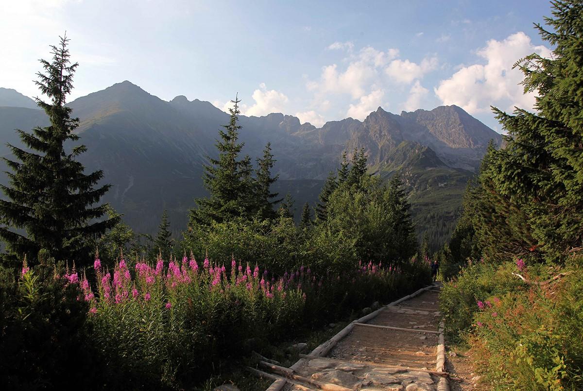 Zdjęcia: W drodze na Granaty, Tatry, Na szlaku, POLSKA